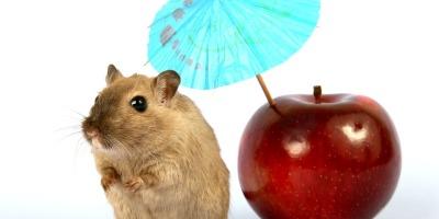 Hamsters Eat Apples